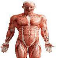 پاورپوینت آشنایی و دانستنی های عضلات بدن
